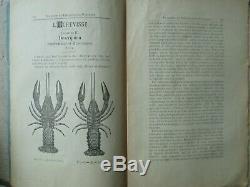 BULLETIN DE PISCICULTURE collection complète n°1/191, 1888/1895, illustrations