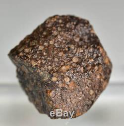 Belle Météorite Chondrite nwa Carboné CV3, 15 g, Complète avec Croûte de Fusion