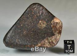 Météorite Chondrite NWA Orientée, Croûte de Fusion noire, Complète, Sahara, 169,2g