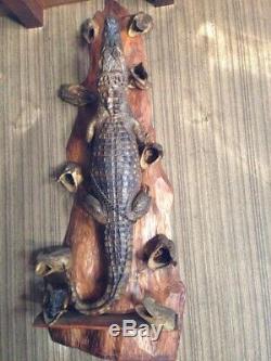 Taxidermie Alligator complet de 1m10